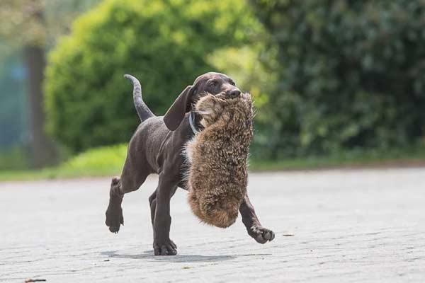 Honden van de Waltakke